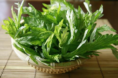 Chia sẻ các bài thuốc chữa đau mỏi lưng từ thảo dược quanh nhà